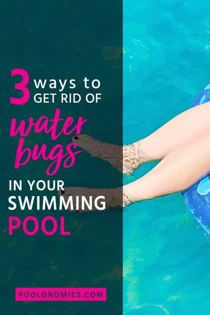 This is a detailed guide covering the exact steps to get rid of and prevent water bugs in your swimming pool. This article will have your pool in pristine condition for summer in no time. #bugs #poolonomics