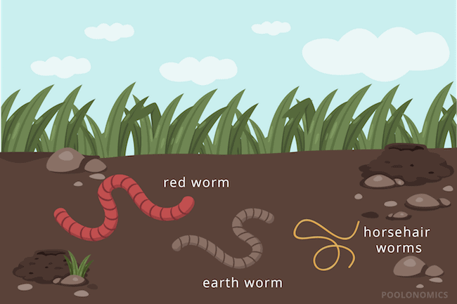 worms in pool
